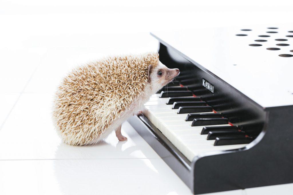 ピアノを弾くことの効果