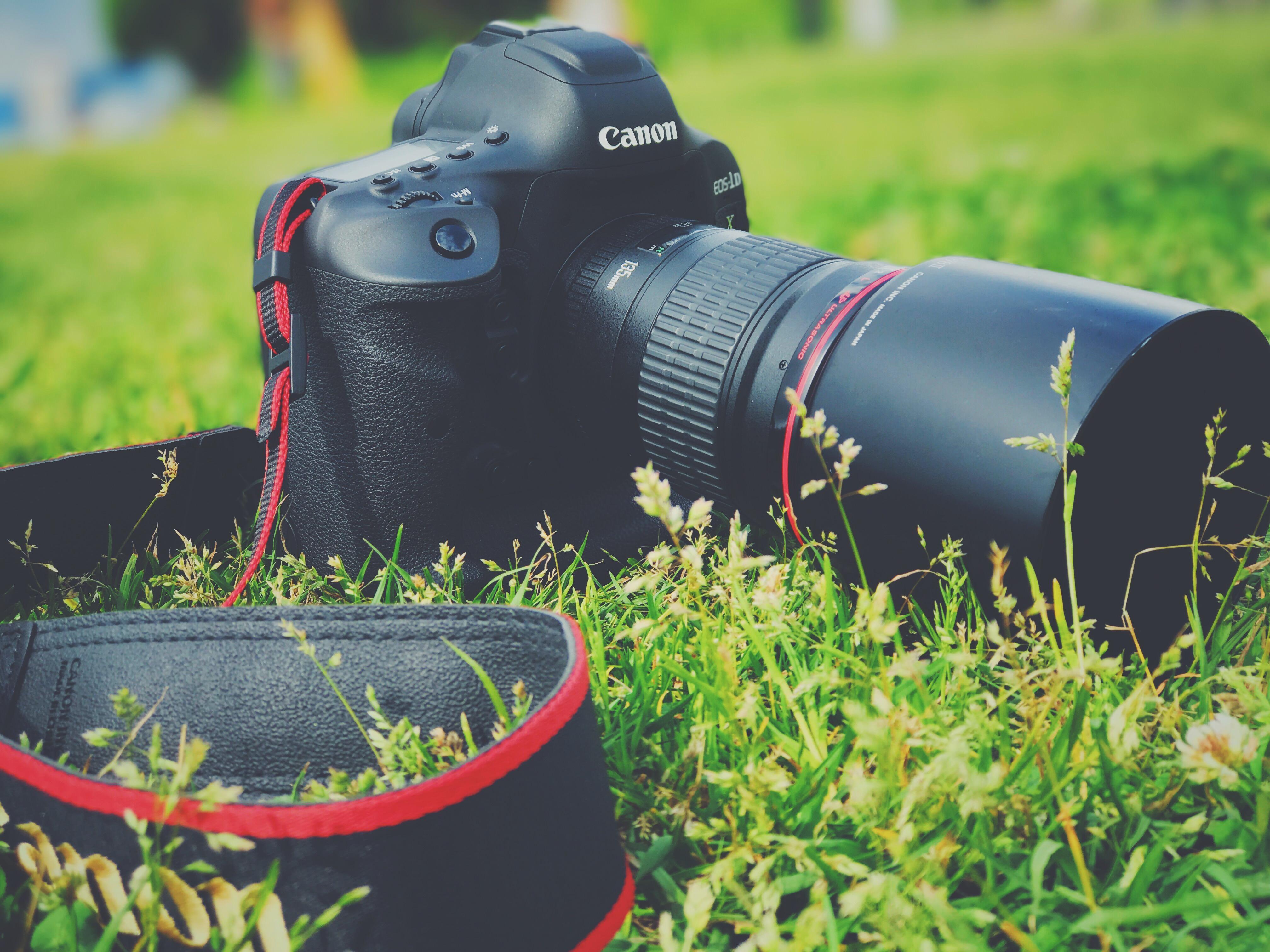 草原とカメラ